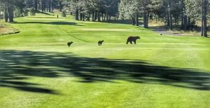 Bears Crossing Golf Course